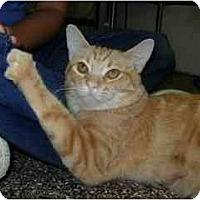 Adopt A Pet :: Bumble - Scottsdale, AZ