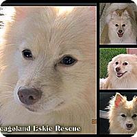 Adopt A Pet :: Vaughan - Elmhurst, IL