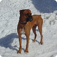 Adopt A Pet :: Coby - Cornwall, ON