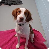 Adopt A Pet :: Hammy - Muskegon, MI