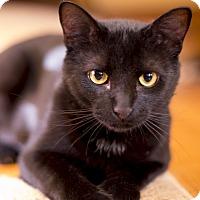 Adopt A Pet :: Nash - Chicago, IL