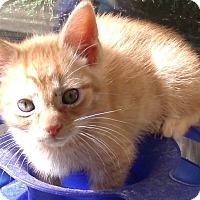 Adopt A Pet :: DEAN - Acme, PA