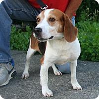 Adopt A Pet :: Prince Dino - Waldorf, MD