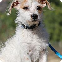 Adopt A Pet :: Elliot - Fillmore, CA