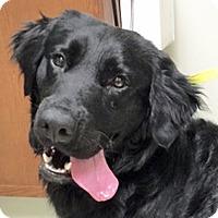 Adopt A Pet :: Finegan - BIRMINGHAM, AL