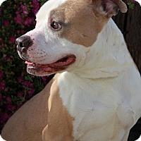 Adopt A Pet :: Dexter - Everett, WA