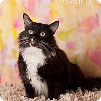 Adopt A Pet :: Hendrix - Glendale, AZ