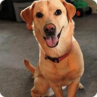 Adopt A Pet :: Sophie - Morganville, NJ
