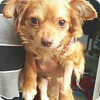 Adopt A Pet :: Jake - Andalusia, PA