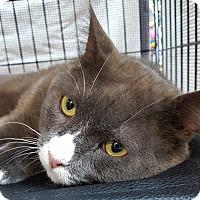 Adopt A Pet :: Churchill - Toronto, ON