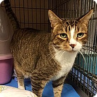 Adopt A Pet :: Oscar - New York, NY