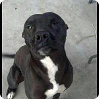 Adopt A Pet :: Guapo - Sacramento, CA