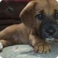 Adopt A Pet :: Ellie - Marlton, NJ