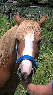 Pony - Welsh Mix for adoption in Hitchcock, Texas - Mona Lisa