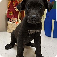 Adopt A Pet :: Spooky Puppies 8 - Pompton Lakes, NJ