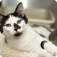 Adopt A Pet :: Sam Winchester - Lombard, IL