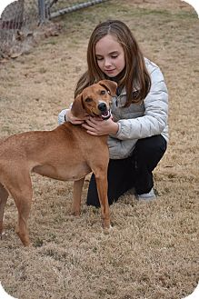 Labrador Retriever Mix Dog for adoption in Chicago, Illinois - Bella
