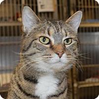 Adopt A Pet :: Missy - Ashtabula, OH