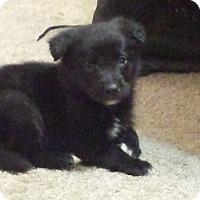 Adopt A Pet :: Sinbad - Davis, CA