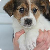 Adopt A Pet :: Kelly - Danbury, CT