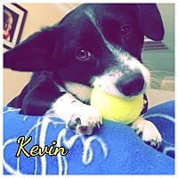 Adopt A Pet :: Kevin - High Point, NC
