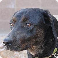 Adopt A Pet :: Pru - Fountain, CO