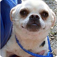 Adopt A Pet :: Boone - Harrison, AR