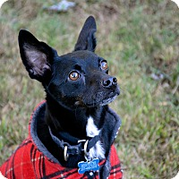 Adopt A Pet :: Brewster - in Maine - kennebunkport, ME