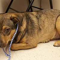 Adopt A Pet :: Blossom - Baton Rouge, LA