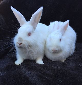 Other/Unknown Mix for adoption in Watauga, Texas - Phoebe & Luciana
