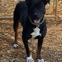Adopt A Pet :: Buddy - Gainesville, GA