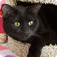 Adopt A Pet :: Morrison - St Louis, MO