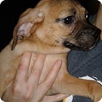 Adopt A Pet :: Kara Orlando Chapter - Orlando, FL