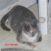 Adopt A Pet :: Joy - Pensacola, FL