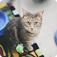 Adopt A Pet :: Penny - Binghamton, NY