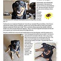 Adopt A Pet :: Dasiy - Mesa, AZ