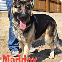 Adopt A Pet :: Maddox - Greensboro, NC