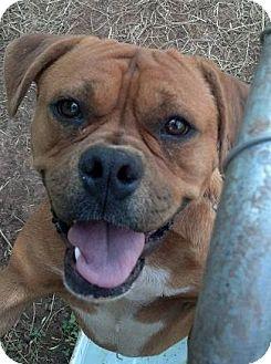 Boxer Mix Dog for adoption in Moulton, Alabama - Rudy