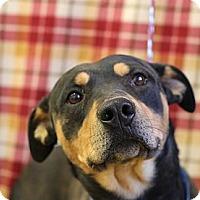 Adopt A Pet :: Kyler - Roosevelt, UT