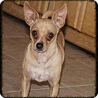 Adopt A Pet :: Rafael - Phoenix, AZ