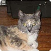 Adopt A Pet :: Kika - bloomfield, NJ