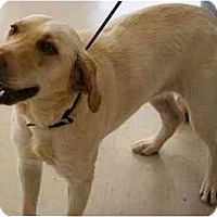 Adopt A Pet :: Lucy Y - Cumming, GA