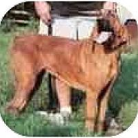 Adopt A Pet :: Claiborne - Carrollton, GA