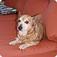 Adopt A Pet :: Teela - Corona, CA