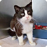 Adopt A Pet :: Mister - Dover, OH