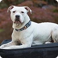 Adopt A Pet :: Ari - Salem, OR