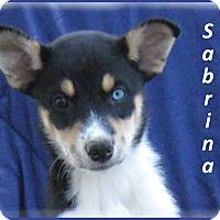 Adopt A Pet :: Sabrina - Marlborough, MA