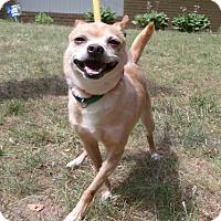 Adopt A Pet :: Lemon - Muskegon, MI