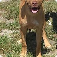 Adopt A Pet :: Gabriel - Manhasset, NY