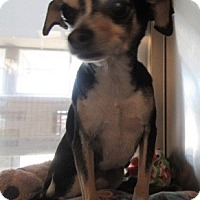Adopt A Pet :: Buster - North Richland Hills, TX